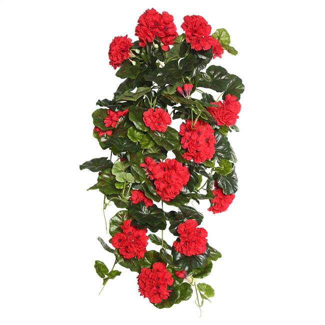 "29"" Red Geranium Hanging Bush"