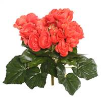 "9.5"" Orange Begonia Bush"