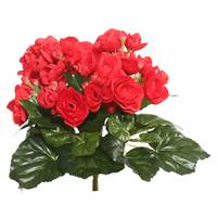 "9.5"" Red Begonia Bush"
