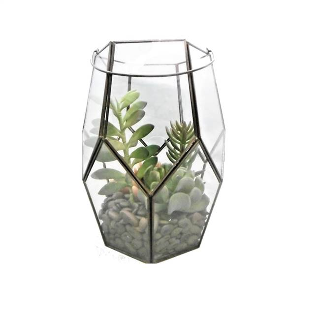 "10"" Green Succulents in Glass Terrarium"