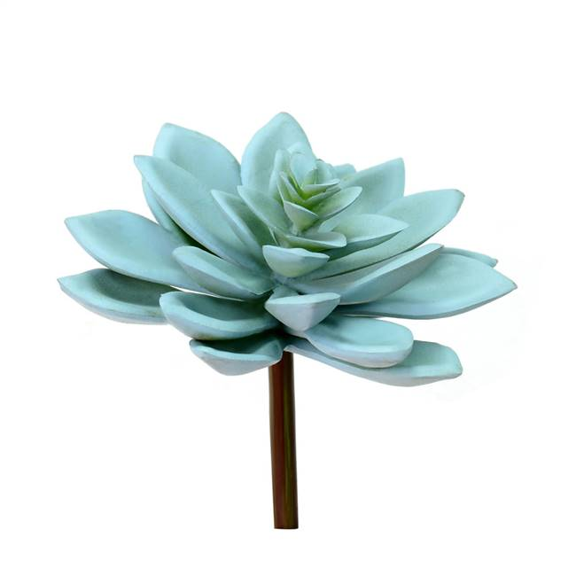 "4.5"" Green Graptoveria Titubans Pick (3/"