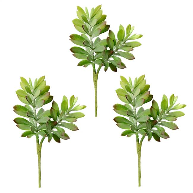 "10"" Green Crassula Tetragona Pick (3/Pk)"