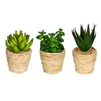 "5"" Green/Red Succulent Twine Pot Set/3"