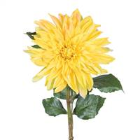"28"" Dahlia Stem Yellow"