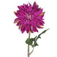 "28"" Dahlia Stem Purple"