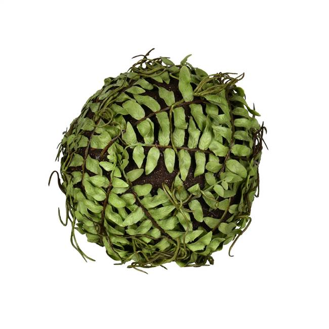 "6""  Green Boston Fern Ball"