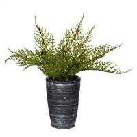 "8.5"" Green Potted Asparagus"