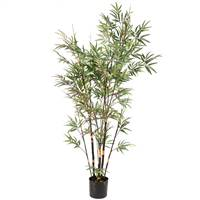 6' Potted Black Bamboo X9 1174 Lvs