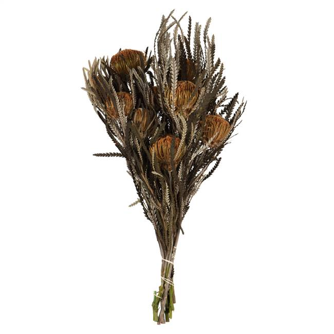 "12-18"" Autumn Banksia Foliage Flower 4oz"