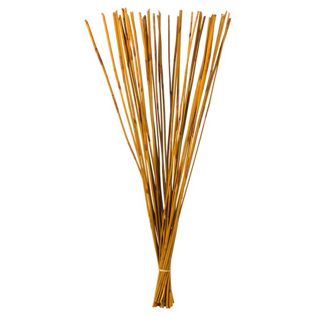"40-42"" Aspen Gold Elephant Reed Bundle"