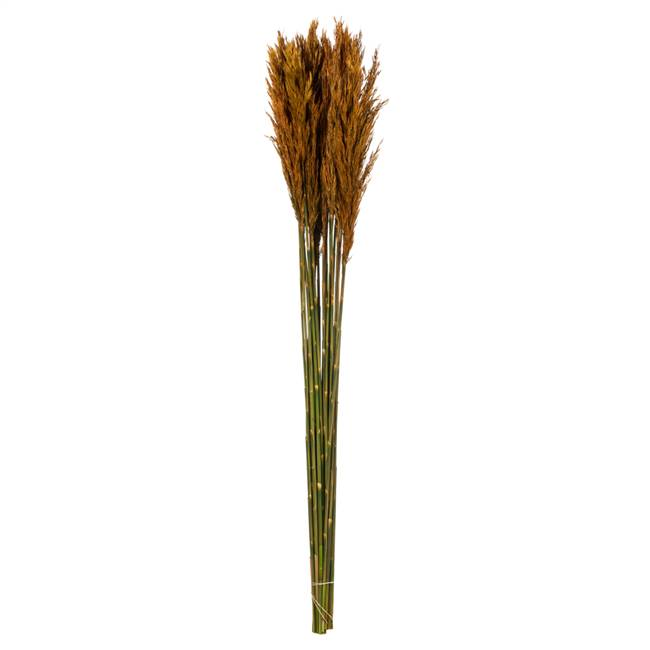 "36-40"" Autumn Plume Reed Bundle"