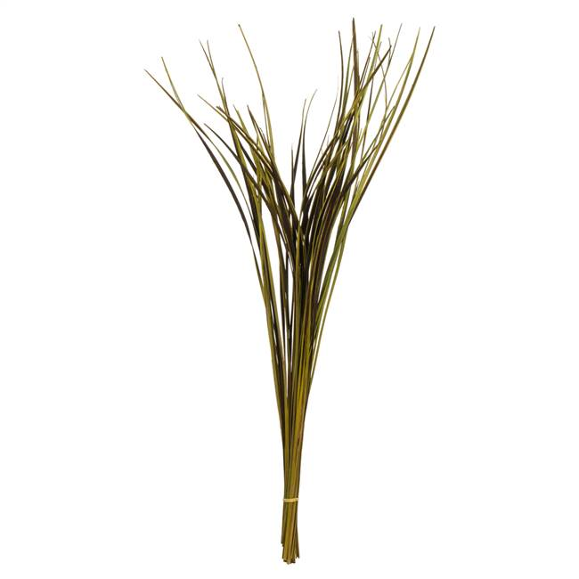 "28-36"" Basil Splinter Grass - 11 oz."