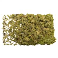 Light Green Reindeer Moss - 8.8 lbs/Box