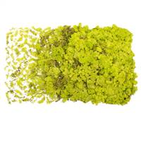 Lime Green Reindeer Moss - 8.8 lbs/Box