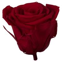 "2.5-3"" Red Standard Rose Head - 6/Box"