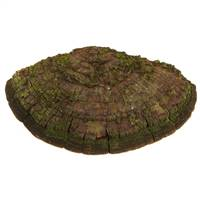 "12-20"" Natural Shelf Mushroom - 1 pc"