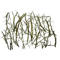 Basil Winged Elm Branches - Bulk