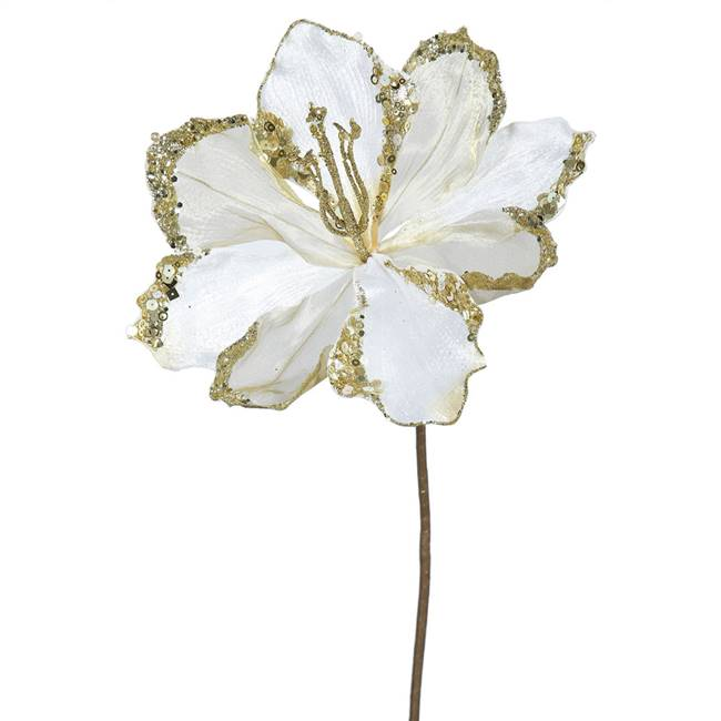 "20"" Cream Amaryllis, 9"" Flower 3/Bag"