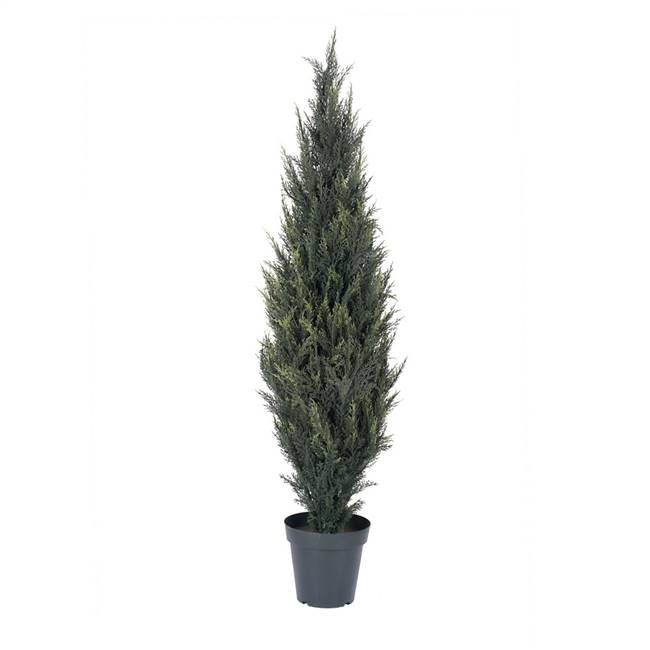 5' UV Pond Cypress Tree w/1543 Lvs
