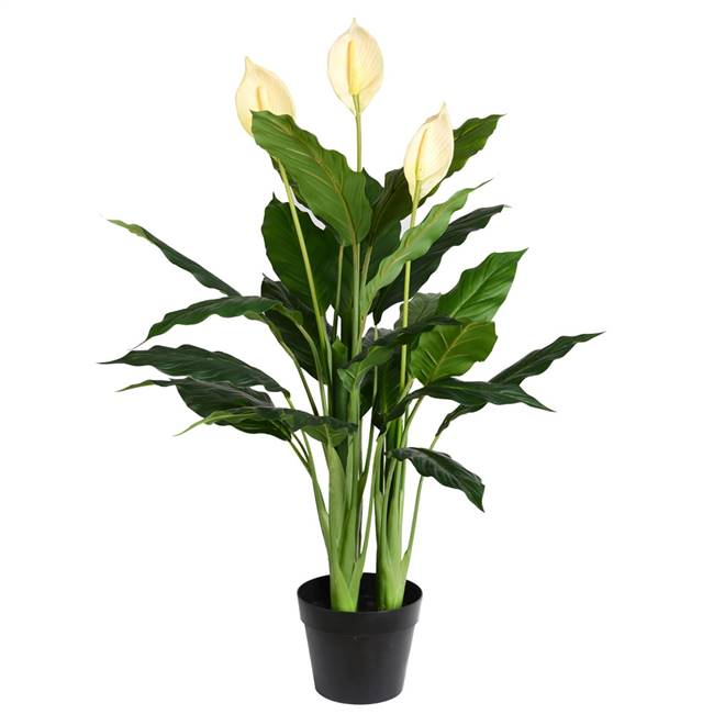 "37"" Green Peace Lily in Pot 27 Leaves"