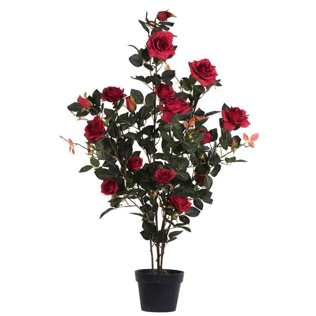 "45"" Red Rose Plant in Pot"