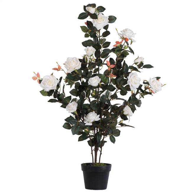 "45"" White Rose Plant in Pot"