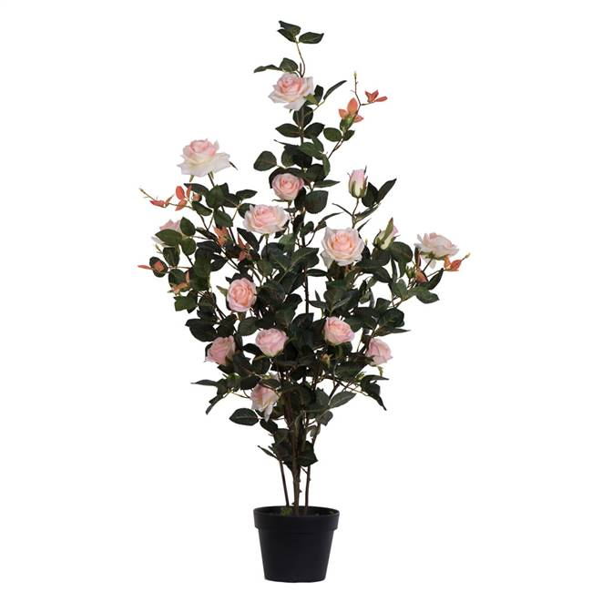 "45"" Pink Rose Plant in Pot"