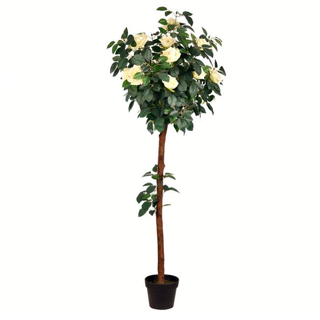5' Potted White Rose Tree x18 Flowers