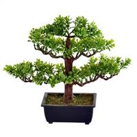 "10"" Potted Murraya Bonsai Tree"
