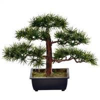 "10"" Potted Guest Greeting Bonsai Pine"
