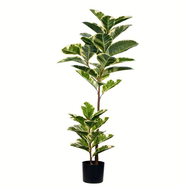 "50"" Potted Oak Tree Real Touch Leaves"