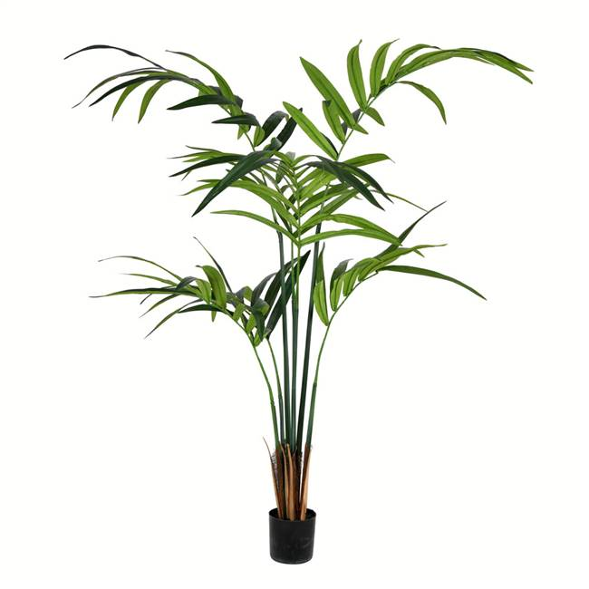 5' Potted Kentia Palm 88 Leaves