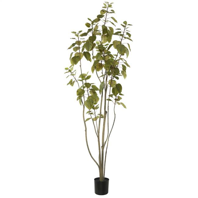 5' Cotinus Coggygria Tree w/Pot-Green