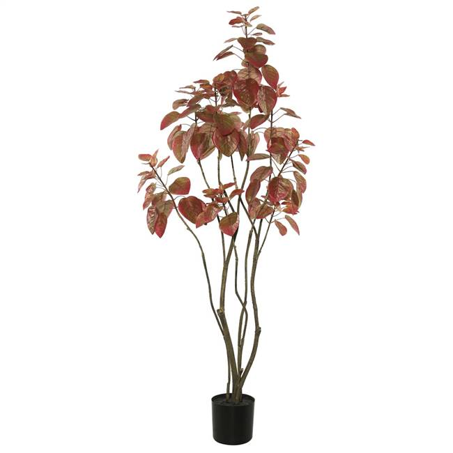 4' Rogot Rurple Tree w/pot-Red