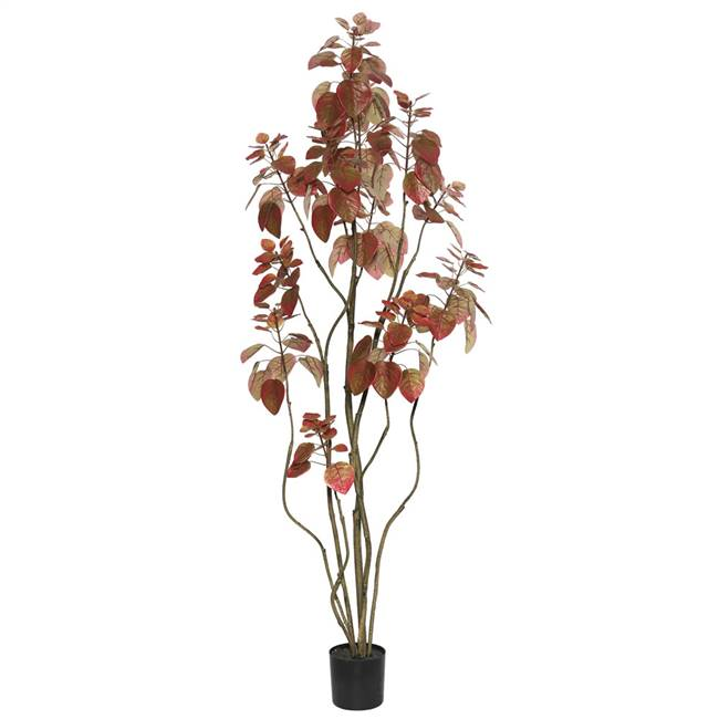 5' Rogot Rurple Tree w/Pot-Red