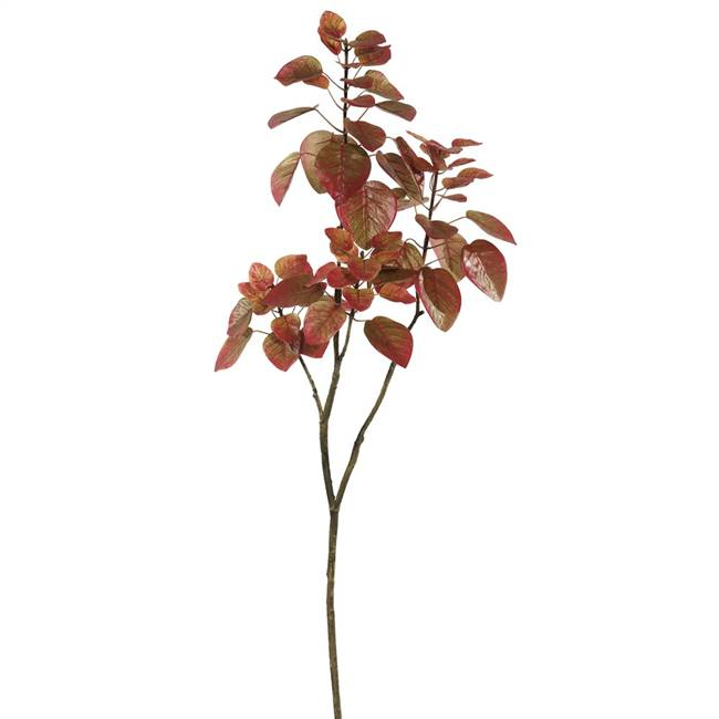 4' Cotinus Coggygria Branch-Red
