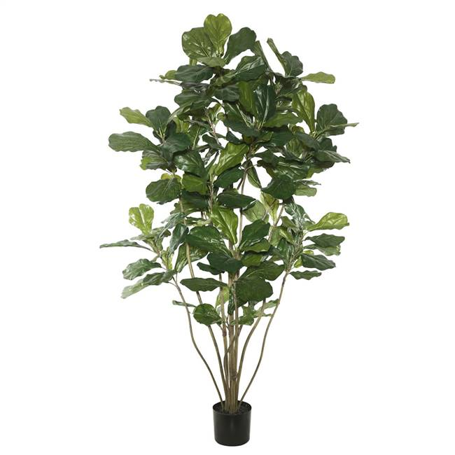 5' Potted Fiddle Tree W/168 Lvs-Green