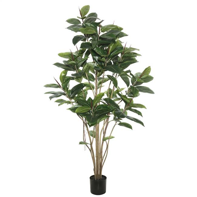 6' Potted Rubber Tree W/185 Lvs-Green