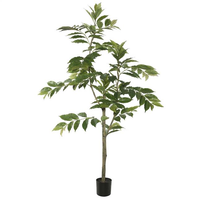 5' Potted Nandina Treew/226 Lvs-Green