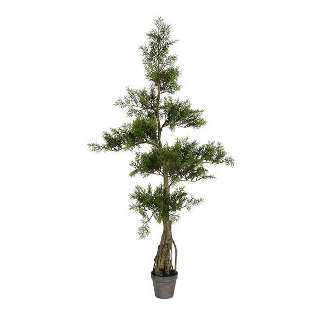4' Potted Cedar Tree 208Lvs