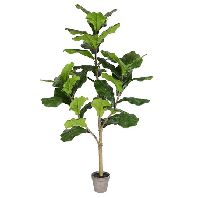 4' Potted Fiddle Tree 39Lvs
