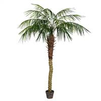 6' Potted Pheonix Palm Tree 545Lvs