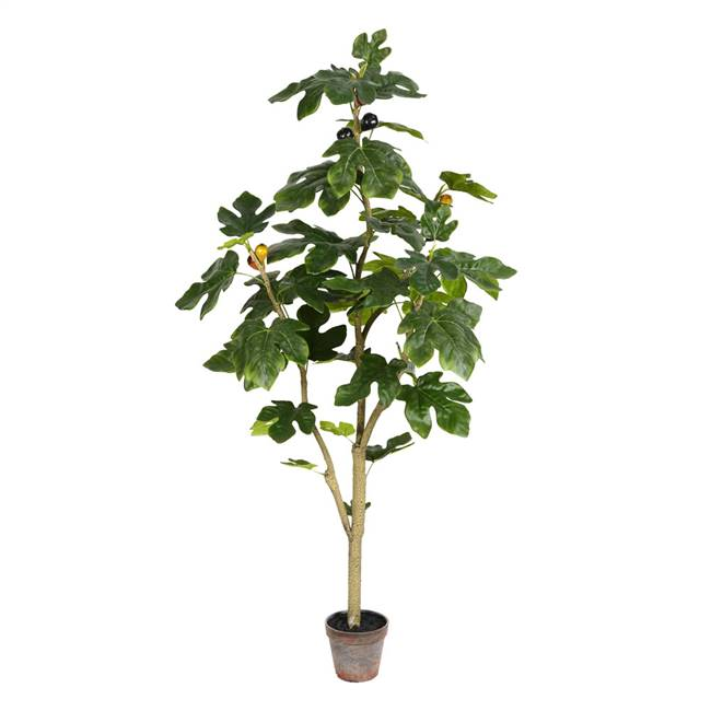 4' Potted Fig Tree 45Lvs