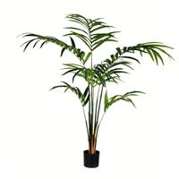 6' Potted Kentia Palm 118 Leaves