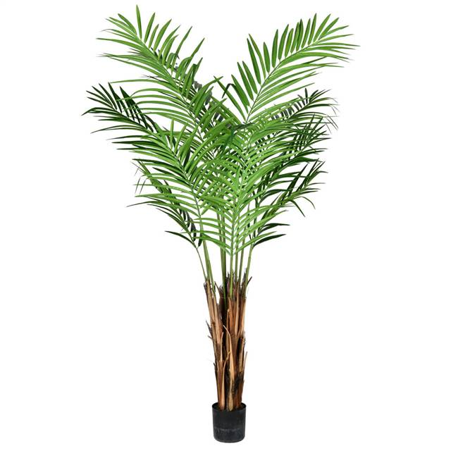 5' Potted Areca Palm 372 Leaves