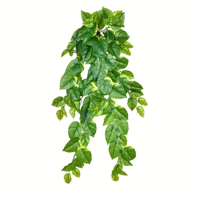 "40"" Pothos Hanging Bush 96 Leaves"