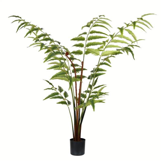 4' Potted Leather Fern 129 Leaves