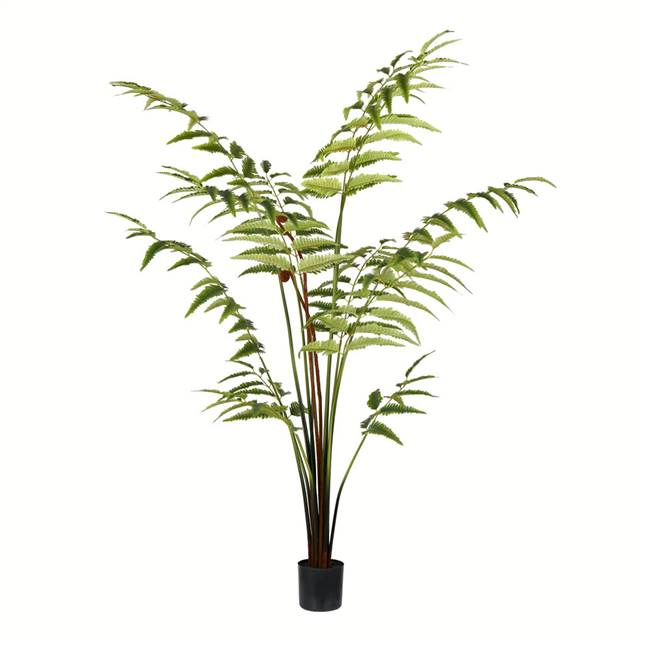 5' Potted Leather Fern 180 Leaves