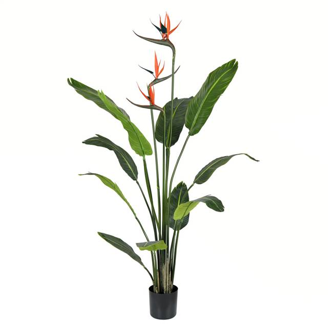 4' Potted Bird of Paradise Palm 11 Leave