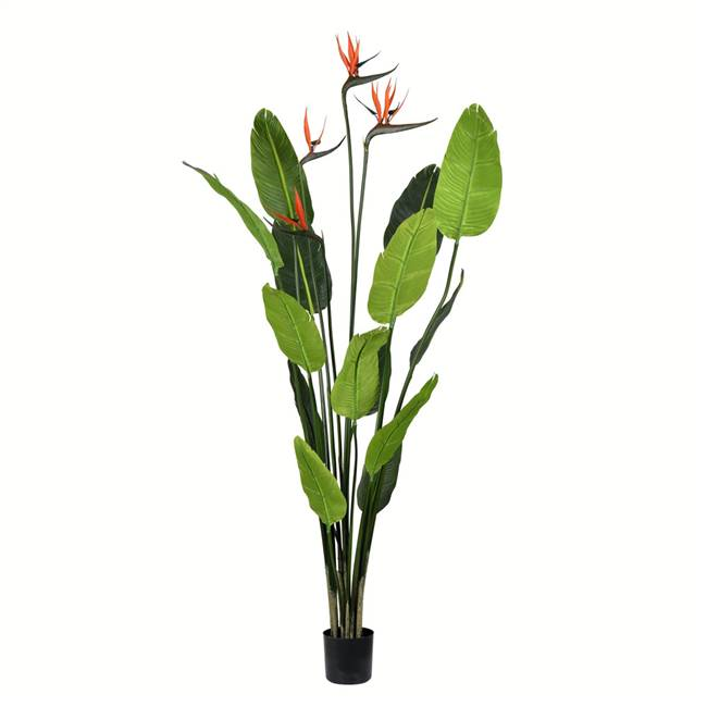 5' Potted Bird of Paradise Palm 14 Leave